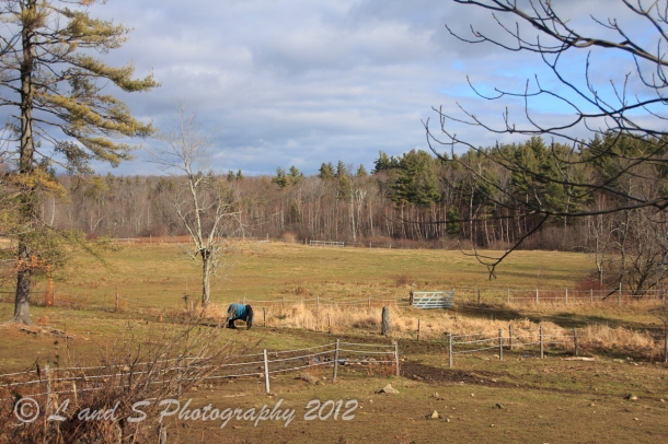 Touchstone Farm-0246