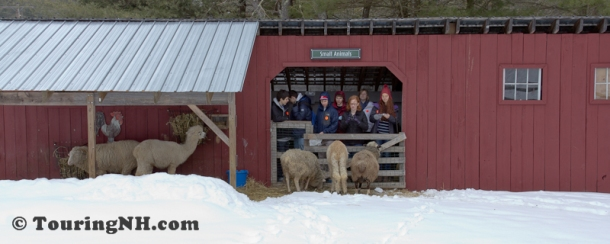 Stonewall Farm -5844