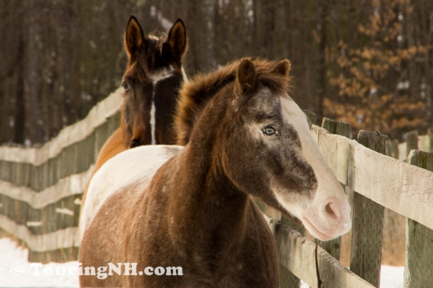 Deering - I was drawn to this horse's blue eyes. I had never before seen a horse with blue eyes