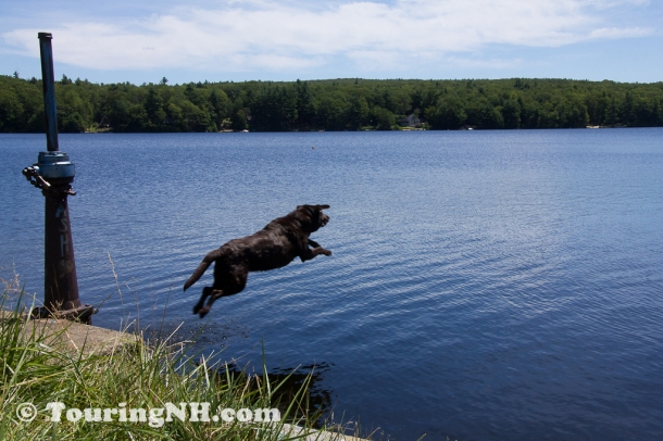 Fitzwilliam - I loved watching this dog play fetch.