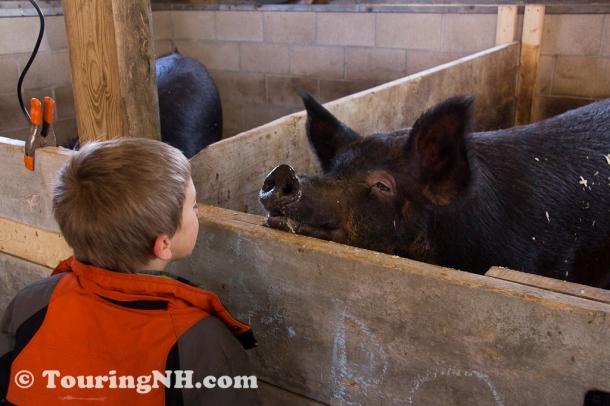 New Ipswich - Story Book Farm