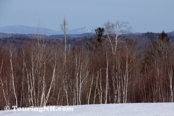 Sullivan - I like how the birch trees stood out and the ski area in the background