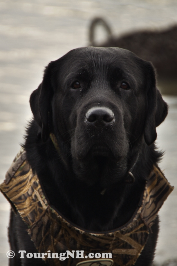 This handsome fellow was very excited to go out duck hunting