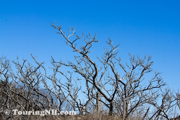There is something almost eerie about the bare branches