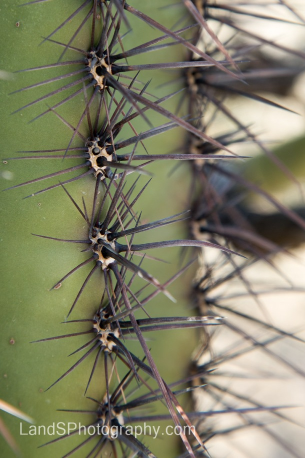 Up close and personal with the spines