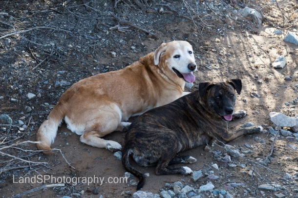 Luckily, the dogs found a bit of shade to rest in after our walk.