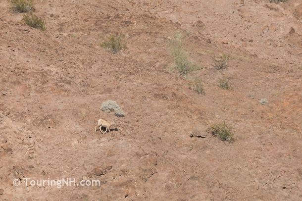 We almost didn't see the mule deer