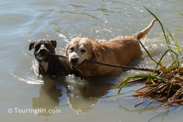 We always tried to find a place for Molly and Diesel to swim and play